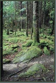 Ireland Tree, Melanie Harrell